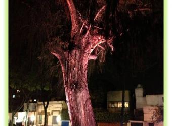 Plaza Cívica Árbol de La Noche Triste - HB LEDS